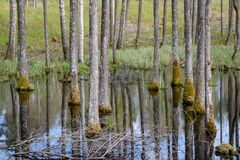tree trunk textured background pattern in water pond Stock Photos