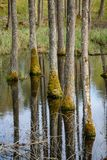 tree trunk textured background pattern in water pond Royalty Free Stock Photos