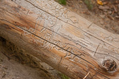 Tree trunk with textured lines Stock Photo