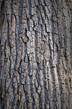 Tree trunk textures Royalty Free Stock Images