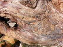 Tree Trunk Textures Royalty Free Stock Photo