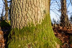 Tree trunk textures in natural environment. Natural environmental detail view in latvia royalty free stock photography