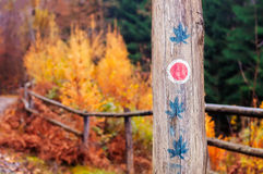 Tree Trunk with Trail Markings and Weed Leaf Paintings. Tree trunk with trail markings and marijuana leaf paintings in the forest in autumn stock photography