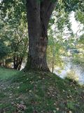 Tree trunk. On the banks of the river with fallen leaves stock images