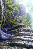Tree trunk Royalty Free Stock Photo