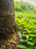 Tree trunk between vegetation stock photo
