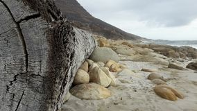 Free Tree Trunk Washed Up On Shore Royalty Free Stock Photography - 93183947