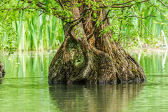 Tree Trunk in Water Stock Photo