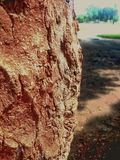 Tree trunk. Royalty Free Stock Photos