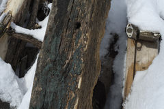 Tree trunk in winter. Closeup with tree trunks in winter season Stock Image