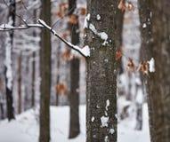 Tree trunk on winter Stock Photo