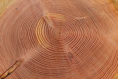Free Tree Trunk With Growth Rings Stock Images - 117290534