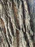 Tree Trunk. Witness the depths of the tree& x27;s trunk. A closer view into nature royalty free stock photography