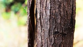 Tree, Trunk, Wood, Branch Royalty Free Stock Images