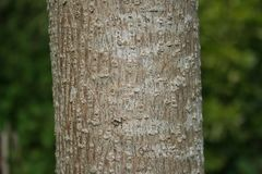 Tree, Trunk, Wood, Branch Stock Photo