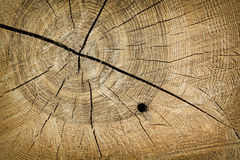 Tree trunk wood grain texture Stock Photos