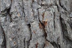 Tree, Trunk, Wood, Rock royalty free stock image