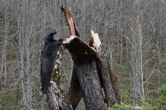 Tree, Trunk, Wood, Woodland royalty free stock image