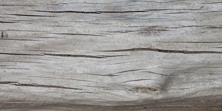 Tree trunk, wooden surface Royalty Free Stock Photo