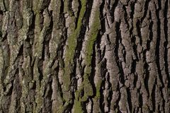 Tree, Trunk, Woody Plant, Branch stock images