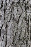 Tree, Trunk, Woody Plant, Plant stock photos