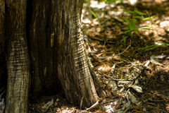 Tree Trunk Wrinkles Royalty Free Stock Images
