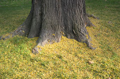 Tree trunk with yellow grass Royalty Free Stock Photos