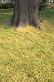 Tree trunk with yellow grass Royalty Free Stock Images