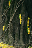 Tree trunk with yellow roses Stock Images