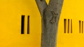 Tree Trunk and Yellow Wall stock footage