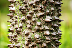 Tree trunks. Close up details of trees Stock Photo