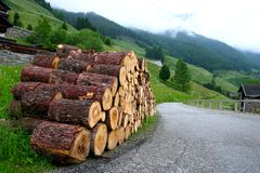 Tree trunks. In a valley called St Veit, Austria royalty free stock photos