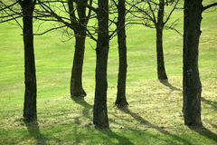 Tree trunks Royalty Free Stock Images