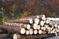 Tree trunks. A selection of tree trunks laying by the road Stock Photo