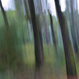 Tree trunks abstract blur Stock Photography