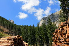 Tree trunks. In the Austrian Alps Stock Images