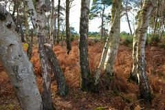 Tree Trunks in Woods Stock Photo