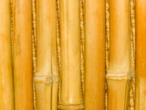Tree trunks a bamboo Stock Images