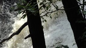 Tree Trunks, Bark, Nature, Waterfalls, Cascades stock video
