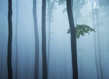 Tree trunks branch and leafs in a cold forest. With fog in the morning Stock Images