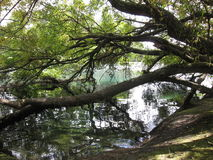 Tree trunks with branches reflecting off river Stock Image