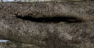 Tree trunks brown textured bark royalty free stock photo