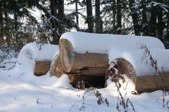 Tree trunks covered with snow stock photos