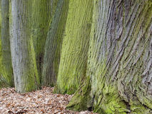 Tree trunks detail Stock Photo