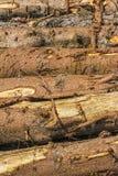 Tree Trunks. Detail of tree trunks in Italy Stock Photos
