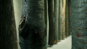 Tree trunks exhibited in a museum stock video footage