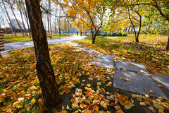 The tree trunks and fallen leaves Stock Photo