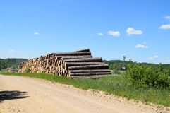 Tree trunks felled by the logging timber industry. Tree trunks felled by the logging timber industry on a sunny summer day royalty free stock photo
