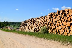 Tree trunks felled by the logging timber industry. Tree trunks felled by the logging timber industry on a sunny summer day royalty free stock images