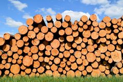 Tree trunks felled by the logging timber industry. Tree trunks felled by the logging timber industry on a sunny summer day stock photo